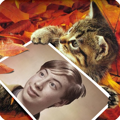 Photo effect - Cute kitten in the autumn leaves